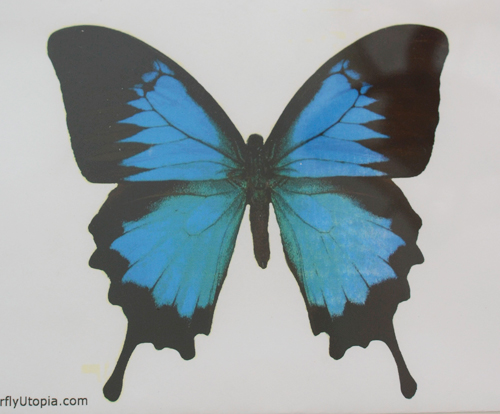 Reggio Inspired Butterfly Art for kids