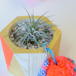 The perfect ladies craft night - make your own air plant planter